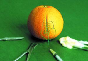 stitches on an orange